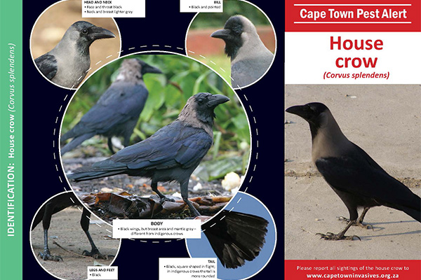 House crow ID Kit Page 1PS
